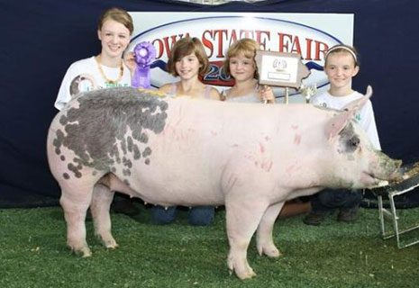 Champion 4-H Derby Hog